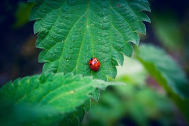 Bug by anna-earwen