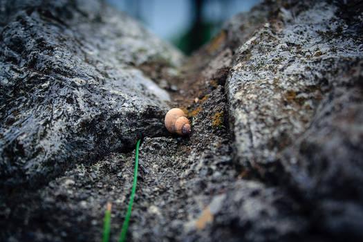 Tiny worlds around us