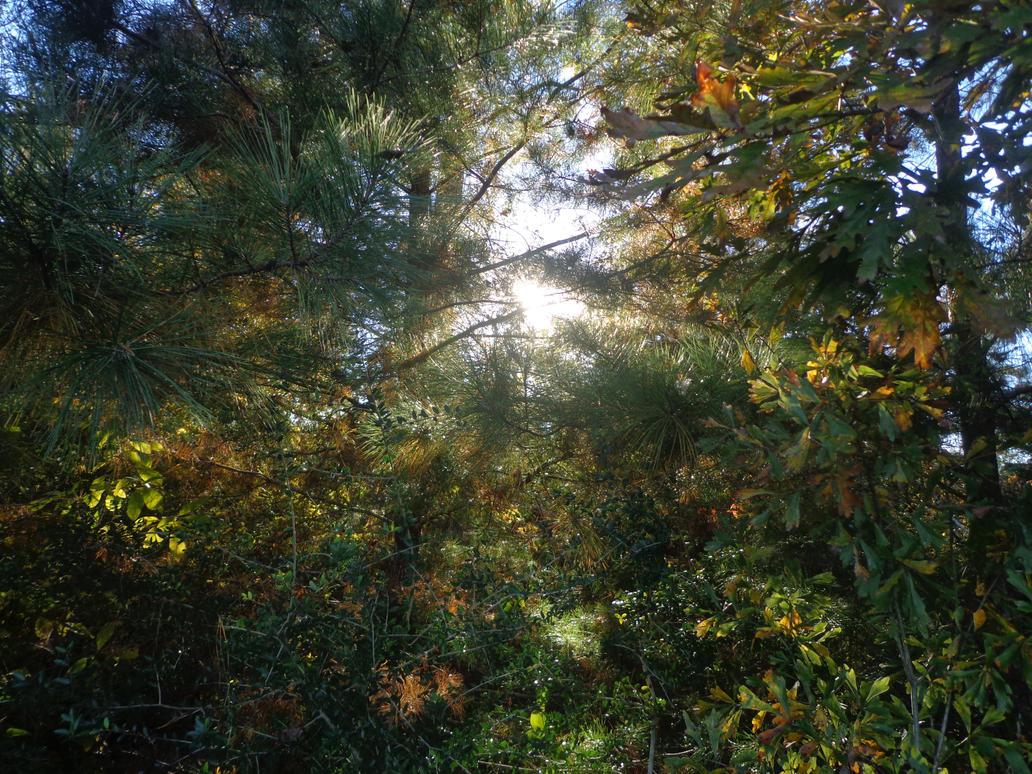 Peeking Sunlight by TheNighttimeWanderer