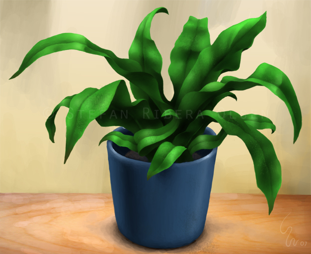 Plant by Ribera