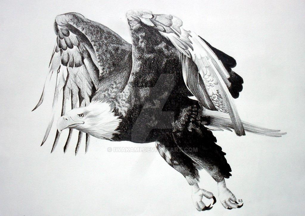 flying eagle by iwakami on deviantart