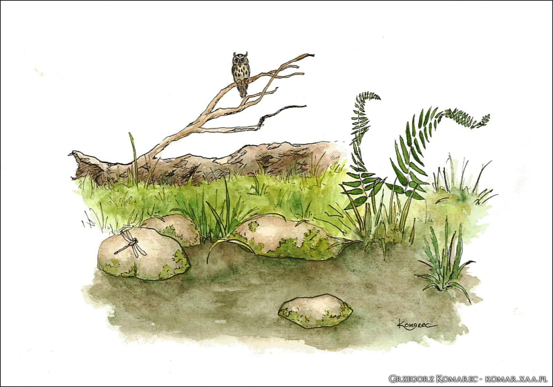 Rest like an owl by Komar4