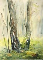 Two birches by Komar4