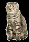 png cat
