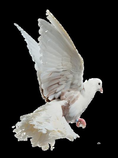 png birds by eross-666