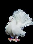 png birds