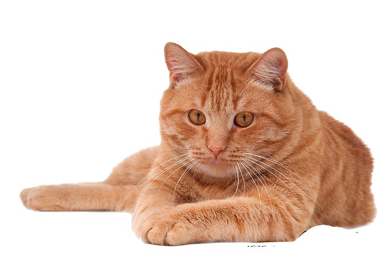 plastic cat carriers