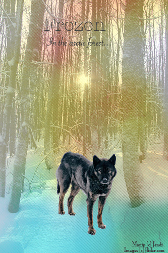 ^ Twilightstars ^ Wolves First_Manip_by_JendiGirl