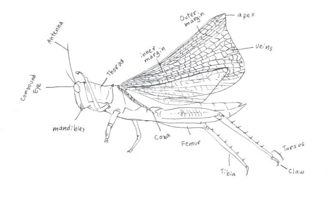 Grasshopper External Diagram Crazywidowfo
