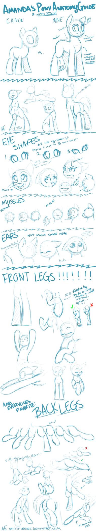 Pony Anatomy by spittfireart
