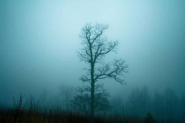 silent by dasTotenkopf