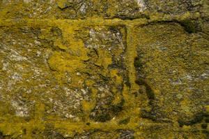 Mossytastic by lindowyn-stock