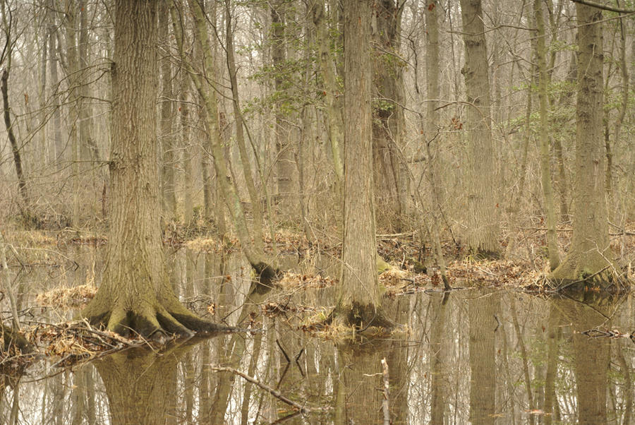 U.S.: Swamp Thing by lindowyn-stock