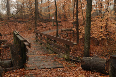 LHP: Bridge in the Forest by lindowyn-stock