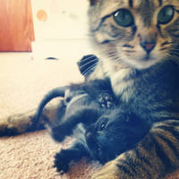 Kittens and mom
