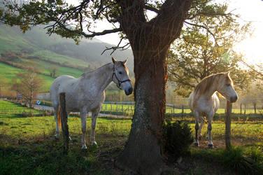 caballos txindoki