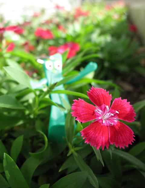 Gumby garden by HannahsDefense