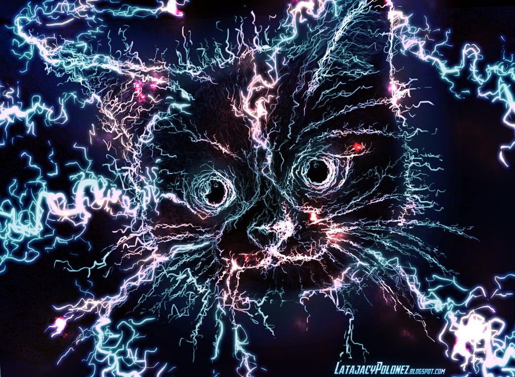 Electro Cat by Pickador