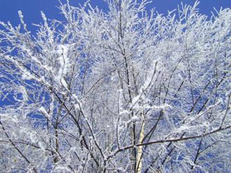 Frozen Feelings I by afLitZ