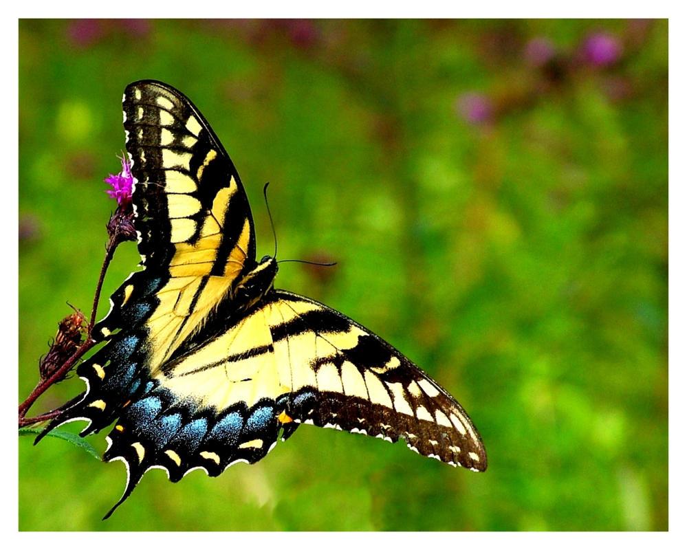 Butterfly by Dystopian-Optimist