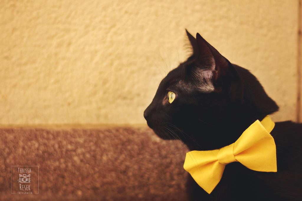 Classy Yellow by tharesek
