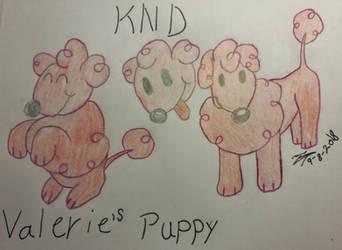 KND Valerie`s Puppy
