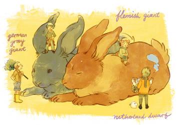 large giant rabbits by starstray
