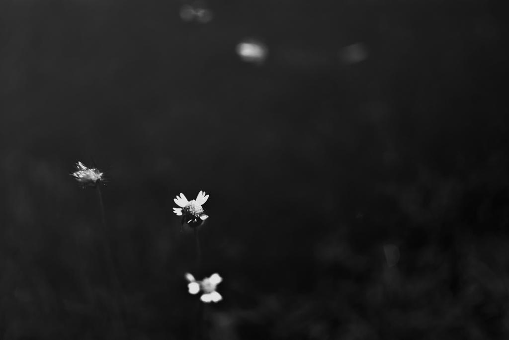 Light by satyam9999