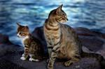 cats by guzin-guzin