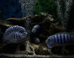 My Aquarium by skulpturro