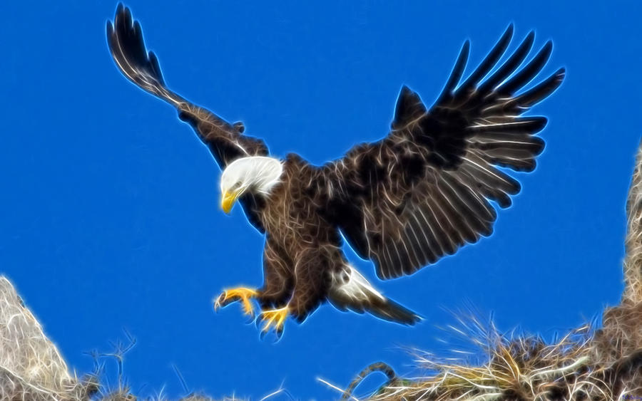 Eagle Landing by billstelling on DeviantArt