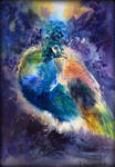 Card7 Peacock