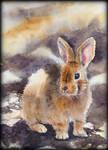 Card12 Bunny