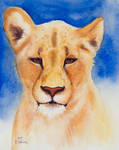 Card 1 Lioness by EarlyOctober