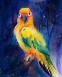 Card 13 Parrot