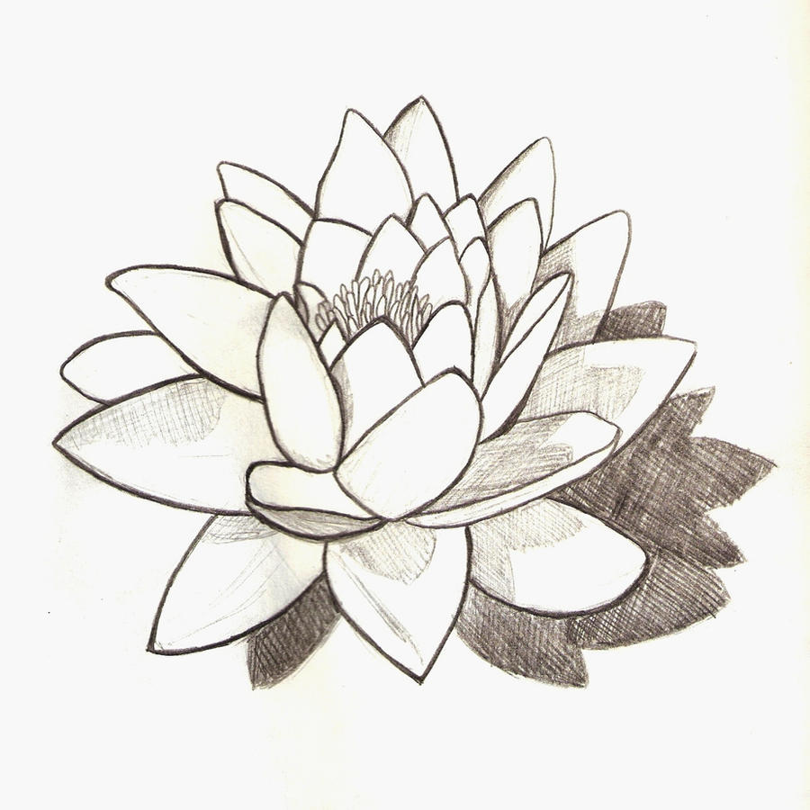 Uncategorized Lilly Pad Drawing water lily by josephinecarlile on deviantart josephinecarlile