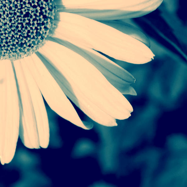 marguerite by globetrotter85