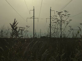 Powerlines by MissLumikki