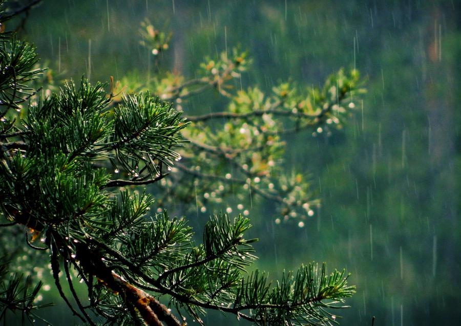 Summer Rain by MissLumikki