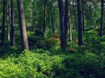 SummerHelsinki2
