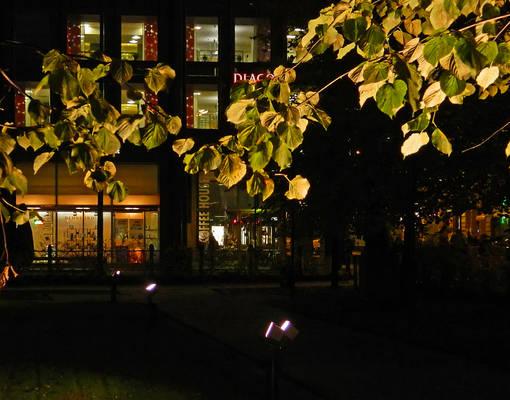 Golden leaves1