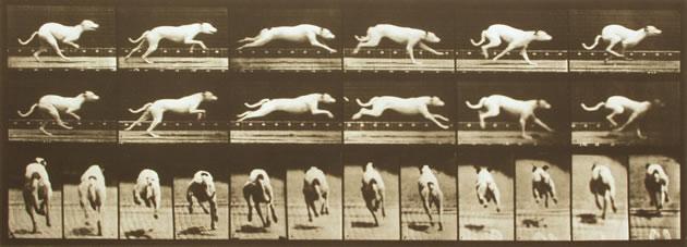 Muybridge Run