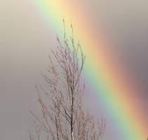 Rainbow by crazyme12