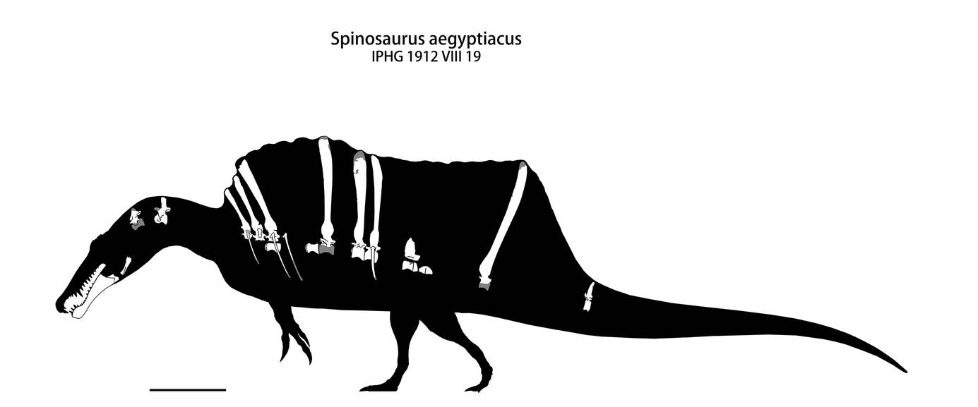 Spinosaurus by yty2000