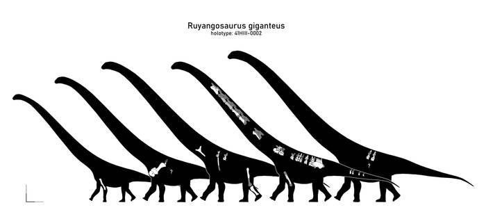 Ruyangosaurus001