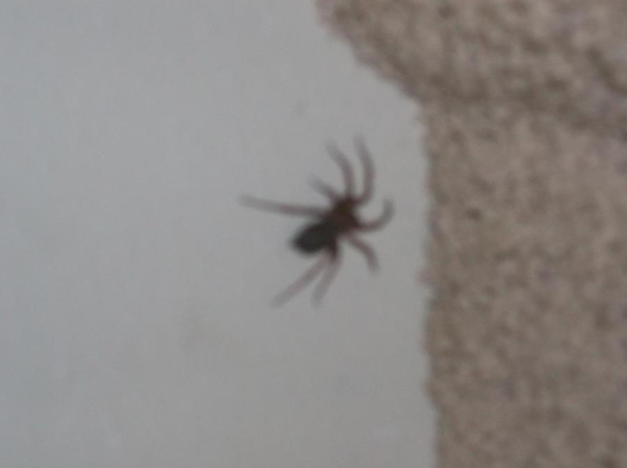 Huge Spider by DiversityDanceQueen