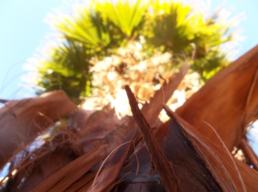 Palm tree by DiversityDanceQueen