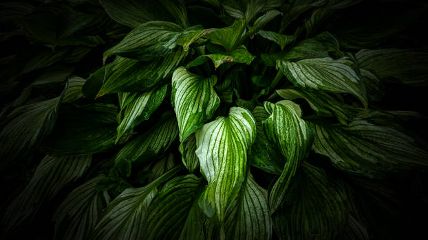Green Leaves