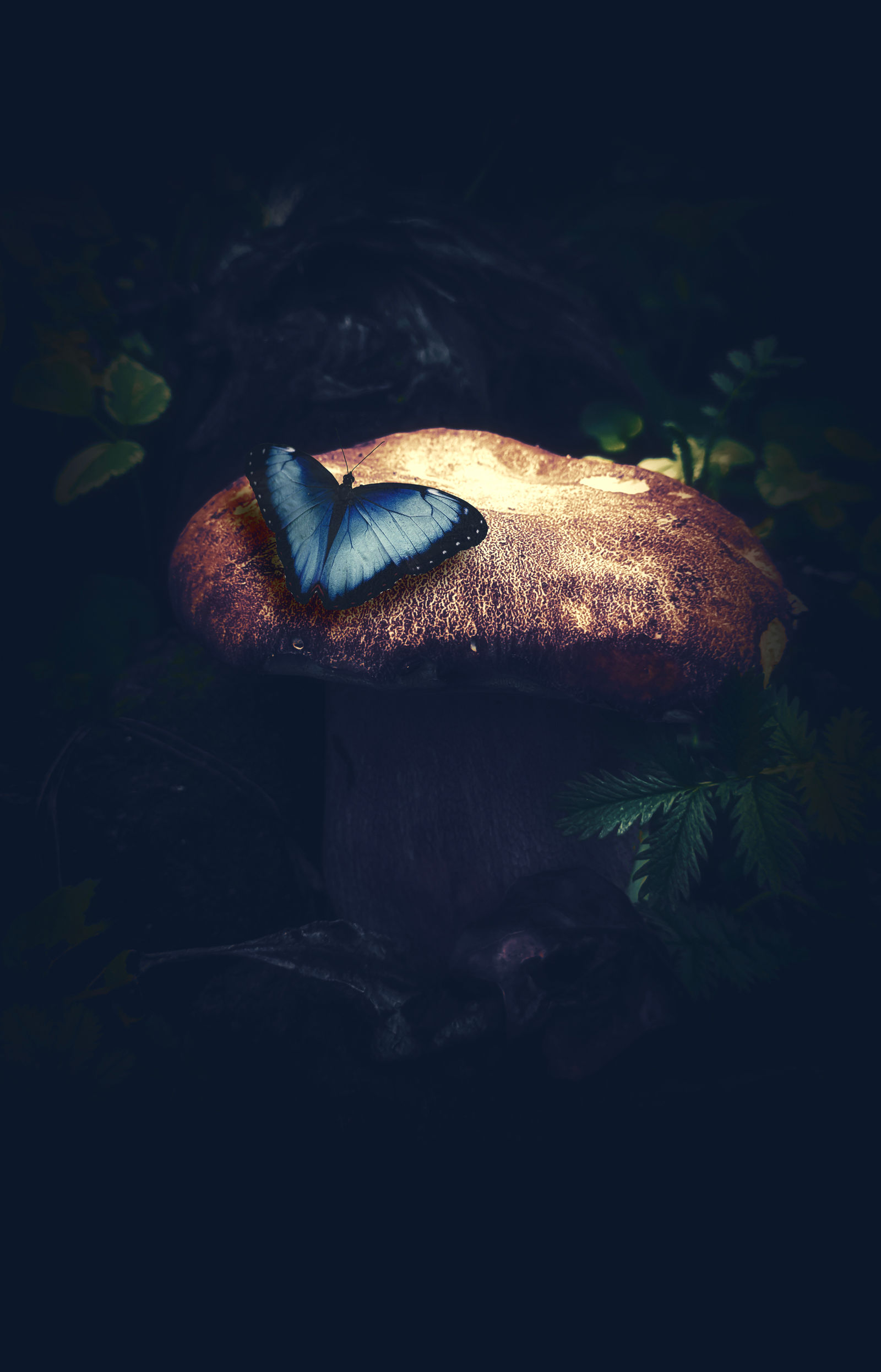 Butterfly and Mushroom