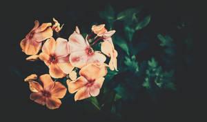 Flower | Slice